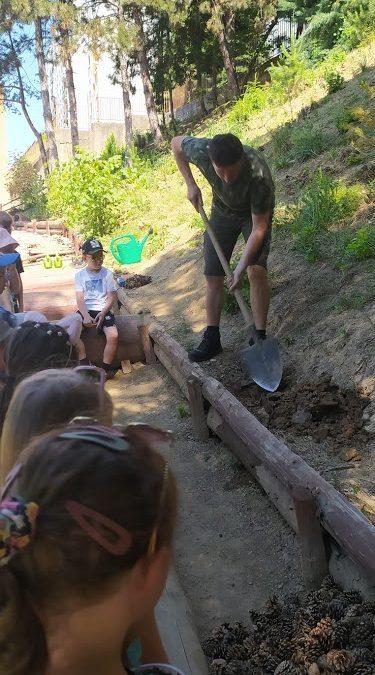 Sadenie dubov na školskom dvore