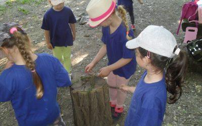 Hľadáme lesné poklady